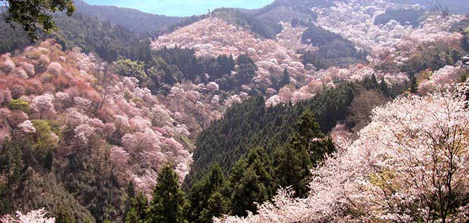 http://87yama.sakura.ne.jp/news/sakura-spot/bxslider/images/photo3.jpg
